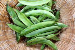Cyamopsis tetragonaloba, Guar bean, Cluster bean. Erect herb with trifoliate leaves, rose colored flowers and longitudinally ribbed beaked pods stock photos