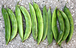 Cyamopsis tetragonaloba, Guar bean, Cluster bean. Erect herb with trifoliate leaves, rose colored flowers and longitudinally ribbed beaked pods royalty free stock photos