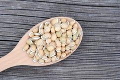 Lablab beans Stock Image