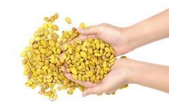 Lablab purpureus bean Royalty Free Stock Photos