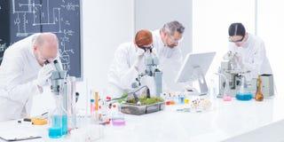 Labor unter Mikroskopanalyse Stockfotos
