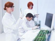 Laborancka rośliny nauka fotografia stock