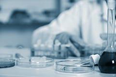 Laborancki asystent w karmowa ilość Komórki kultury assay badać genetycznie zmodyfikowanego ziarna fotografia stock