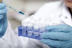 Laborancki asystent w karmowa ilość Komórki kultury assay badać genetycznie zmodyfikowanego ziarna zdjęcie stock