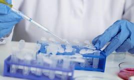 Laborancki asystent w karmowa ilość Komórki kultury assay badać genetycznie zmodyfikowanego ziarna obraz royalty free