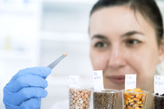 Laborancki asystent w laboratorium karmowa ilość Komórki kultury assay badać genetycznie zmodyfikowanego ziarna zdjęcie stock