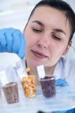 Laborancki asystent w laboratorium karmowa ilość Komórki kultury assay badać genetycznie zmodyfikowanego ziarna zdjęcie royalty free