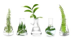 Laboranckie kolby z roślinami na białym tle zdjęcie stock