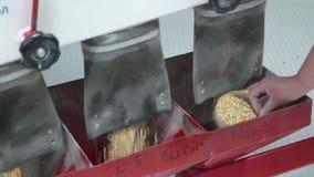 Laboranckiego asystenta probiercza ilość kukurydzani ziarna zbiory
