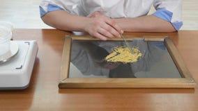 Laborassistenzprüfungsqualität von Maissamen stockbilder