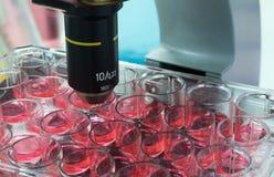 Laboratório da microbiologia Imagem de Stock Royalty Free