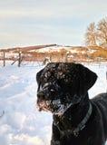 Laboratoire de neige Images stock