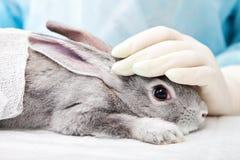 Laboratoire de vétérinaire images stock