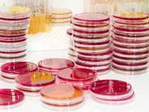 Laboratoire microbiologique photos stock