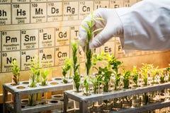 Laboratoire pharmaceutique explorant de nouvelles méthodes de guérison d'usine Image libre de droits