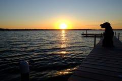Laboratoire se reposant sur le dock de bateau au coucher du soleil Photos stock