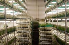 Laboratoires de recherche agronomique Photos stock