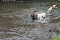 Laboratoires jouant dans l'eau Photo libre de droits