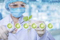Laboratorian houdt een spruit in een laboratoriumbuis en verkrijgt steekproeven met medische klem bij symbolenvoorgrond stock afbeeldingen