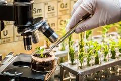 Laboratorio chimico che esplora i nuovi metodi di allevamento vegetale Immagine Stock Libera da Diritti