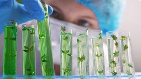 Laboratorio d'organizzazione genetico di ricerca biologica di Wet Plant Seedling del ricercatore stock footage