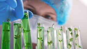 Laboratorio d'organizzazione genetico di ricerca biologica di Wet Plant Seedling del ricercatore archivi video