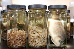 Laboratorio de ciencia: Muestra de los pescados Imagen de archivo
