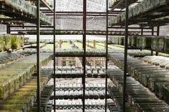Laboratorio dell'orchidea Fotografie Stock Libere da Diritti