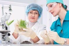 Laboratorio di biotecnologia Immagini Stock
