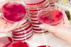 Laboratorio microbiológico foto de archivo libre de regalías