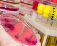 Laboratorio microbiológico fotos de archivo libres de regalías