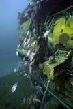 Laboratorio subacqueo del Aquarius - Largo chiave Florida Fotografie Stock Libere da Diritti