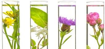 Laboratorium, menchie, banksja, oset i dandelion w próbnej balii, Obraz Royalty Free