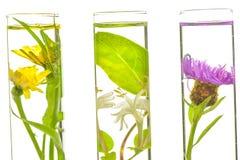 Laboratorium, menchie, banksja, oset i dandelion w próbnej balii, Fotografia Royalty Free