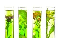 Laboratorium, menchie, banksja, oset i dandelion w próbnej balii, Zdjęcia Royalty Free
