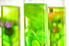 Laboratorium, menchie, banksja, oset i dandelion w próbnej balii, Zdjęcia Stock
