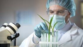 Laboratoriumarbeider die de groei van groene spruiten in buizen analyseren, bewaarmiddelenonderzoek royalty-vrije stock foto