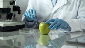 Laboratoriumarbeider die onderzoek naar appel uitvoeren, die chemische reactie controleren stock foto