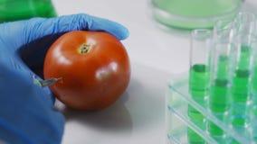 Laboratoriumarbeider die pesticidevloeistof in een tomaat inspuiten die gmo voedsel, experiment analyseren stock video
