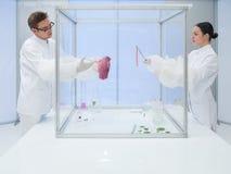 Laboratoriumarbeiders die een vleessteekproef testen stock foto's