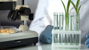 Laboratoriumingenieur die substantie uitvinden die germinatie van graangewassen versnelt royalty-vrije stock afbeelding