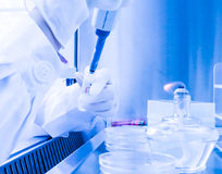 Laboratoriummedewerker in een steriel milieu voor micro-bemonstert Stock Foto's
