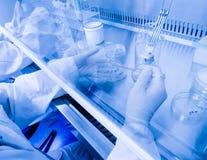 Laboratoriummedewerker in een steriel milieu voor micro-bemonstert Royalty-vrije Stock Foto's