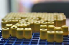 Laboratoriumsmå medicinflaskor Royaltyfri Foto