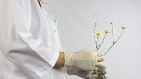 Laboratoriumvrouw met handschoenen gezette madeliefjebloem in fles stock videobeelden