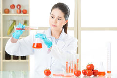 Laboratory analysis of apple gmo food for test. In laboratory royalty free stock image