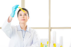 Laboratory analysis of soya gmo food for test. In laboratory royalty free stock photos