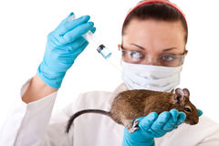 Laboratory animal research Royalty Free Stock Photos