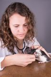 Laboratory animal research rat Royalty Free Stock Photography