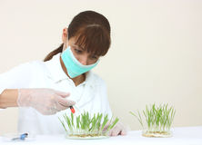 A laboratory assistant Stock Photography